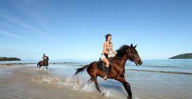 meilleur casque équitation