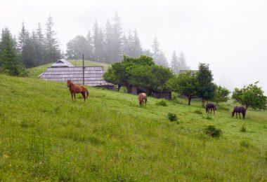 les plantes et les chevaux