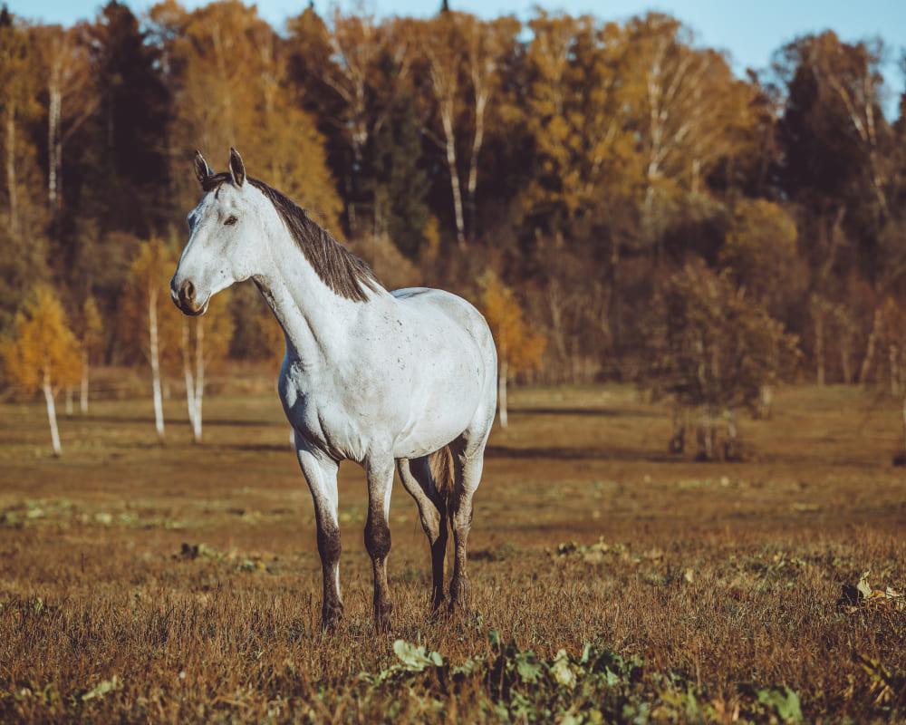 promenade de cheval