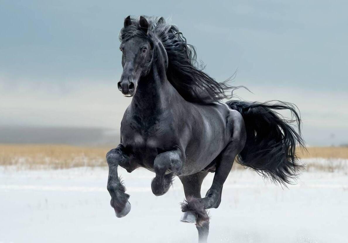 cheval qui court endurant