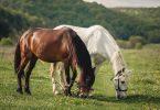 race de cheval
