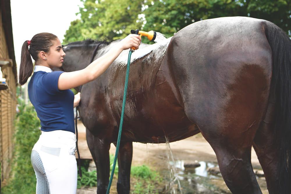 femme qui lave son cheval